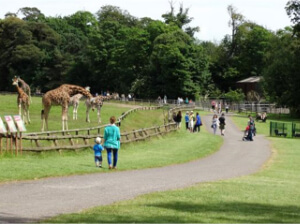 Fota Wildlife